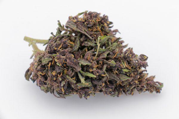 purple 1 scaled