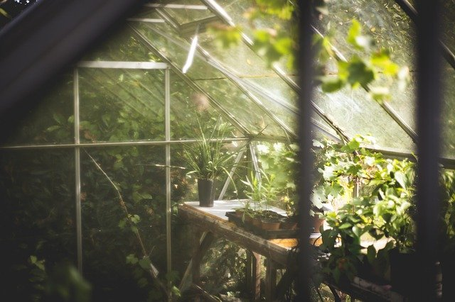 cbd greenhouse